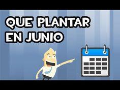 Que Plantar en Junio | Calendario de Siembra