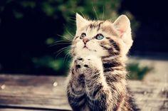 Pweez, pweez, I'w be a good kitty, weally, I will!!