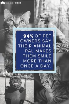 Custom Veterinary Websites, SEO, and Cloud Hosting Veterinarian Quotes, Humor, Pets, Animals, Animales, Animaux, Humour, Funny Photos, Animal