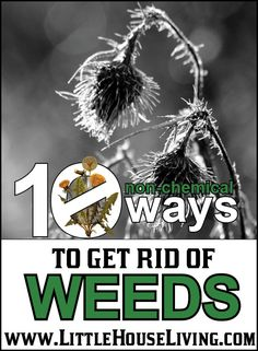 10 non-chemical ways to get rid of weeds - and 13 other simple DIY outdoor weekend projects!
