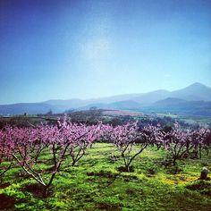 Naousa, Greece http://instagram.com/cyathens