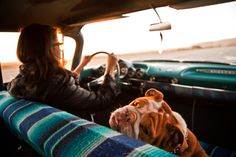 I LOVE this photo! The lighting, the seat cover, her glasses...and of course the beautiful wrinkles on that doggy face!
