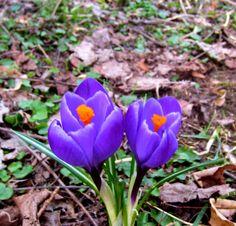 Kurze Laufrunde bei den Enten am 29.03.2013 bei +5 Grad. Weitere Touren: http://trampelpfad.net/