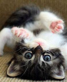 Cat lover hookup videos on youtube