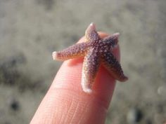 Never saw such a tiny starfish. It is soo cute