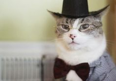 professor kitty is giving a pop quiz right meow!