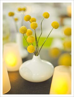 Yellow Billy Balls tend to be available early May to late October. They are so cute on their own or to inject some playfulness into a summer wedding.