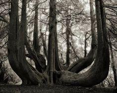 drzewa (13)