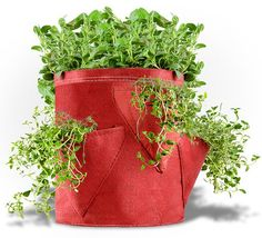 How cool is this Bloom Bagz Herb Planter? Great price too! http://amzn.to/1QVjUbj #gifts #gardeners