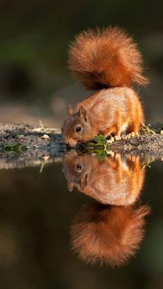 Adorable squirrel, look at that tail! ^_^