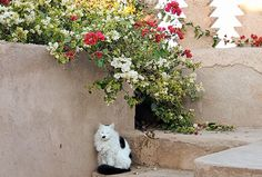 Cat from Marrakesh, Morocco
