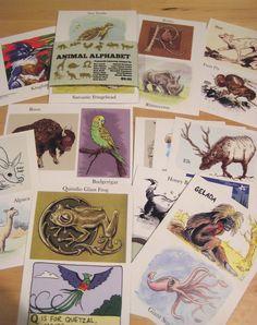 Animal Alphabet Postcards (27)