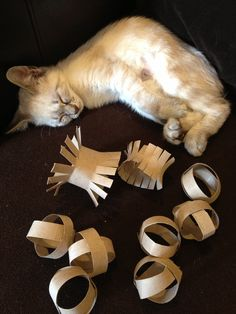 Cat toys made from toilet paper rolls. I have to try this since our Zoe loves TP rolls already. #Cattoys