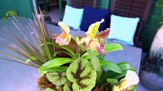 Create a Sandy Zen Garden Arrangement Create a Sandy Zen Garden Arr Indoor Vegetable Gardening, Vegetable Garden Planning, Vegetable Garden For Beginners, Backyard Vegetable Gardens, Cottage Garden Plants, Container Gardening Vegetables, Succulent Gardening, Vegetable Garden Design, Gardening Tips