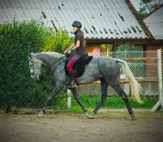 Yegua para salto y raid Horses, Animals, Horses For Sale, Running Horses, Show Jumping, Equestrian, Animales, Animaux, Animal