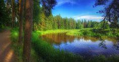 Luonto - it's out there!  pupuja saukko tai joku majava. Puut pensaat... #t