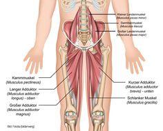 Anatomie Muskeln: Yoga-Übungen für offene Hüften