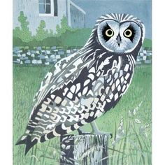 'Short-eared Owl' by Lisa Hooper