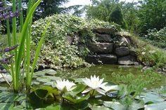 Sylvie trouve le bruit de la cascade de son bassin très reposant. Une bâche pour bassin a été utilisée pour le bassin principal, la rivière et le petit bassin avec cascade. Elle a été soudée pour une meilleure étanchéité. Une partie marécageuse à base de pouzzolane a été agrandie pour accueillir plusieurs plantes qui assurent la filtration de l'eau, comme un lagunage. Des pierres et des galets garnissent les bords du bassin.