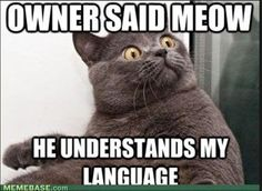 OMG............... my owner now knows my language?