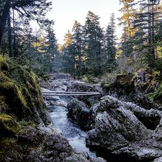 Little Qualicum Falls Provincial Park via @_kelseyweiss on Instagram: #ExploreCanada #exploreBC #exploreVancouverIsland #myPQB