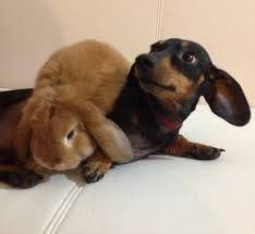 Per combattere gli abbandoni l'America vieta la vendita di cuccioli di pet nei negozi per animali: e l'Italia cosa fa? -
