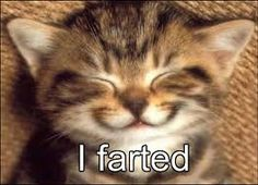 25 funny cat pictures with captions