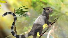 New Fossils Push Back The Origin Of Mammals By Millions Of Years
