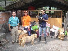 Ayudando perritos