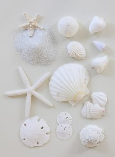 SHELLS! Sand dollars. Sea stars. All white. http://media-cache-ak0.pinimg.com/originals/5f/f1/9e/5ff19e361798810278cc46c477ec55ab.jpg