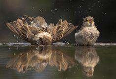 sparrows... Not one falls without Him knowing- He cares for you