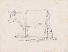 Antique Print Sketches of Domestic Animals Cow Studies in a Farmyard (D75) via Grandpa's Market. Click on the image to see more!