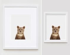 Bear Cub Close-Up - The Animal Print Shop by Sharon Montrose.  So cute for nursery animal college.