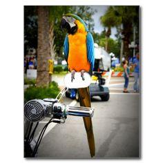 Biker Bird Postcard