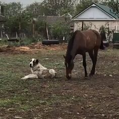 Look at them play how sweet cute funny animals, cute baby animals, funny animal Cute Funny Animals, Cute Baby Animals, Funny Dogs, Animals And Pets, Cute Dogs, Wild Animals, Funny Humor, Beautiful Horses, Animals Beautiful