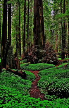 Redwoods Wonderland Photograph by Benjamin Yeager - Redwoods Wonderland Fine Art Prints and Posters for Sale