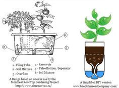 """It has been demonstrated that plants grow better in self-watering containers as opposed to traditional containers. In many cases, under proper care, they will also outperform vegetables grown in a traditional backyard garden. This is due in part to a principal known as """"transpirational pull""""."""