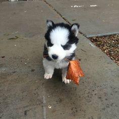 葉の贈り物をあなたに提示するこの小さな子犬はあなたの心の奥深くに何かをかき立てるなら、私たちはあなたのための素晴らしいニュースを持っています。