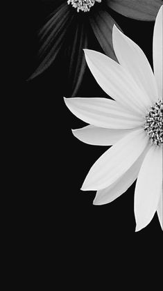 Pic not mine Flower Background Wallpaper, Flower Phone Wallpaper, Butterfly Wallpaper, Cute Wallpaper Backgrounds, Cellphone Wallpaper, Flower Backgrounds, Beautiful Flower Names, Beautiful Flowers Wallpapers, Pretty Wallpapers