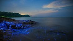 Biolumineszenz entlang der Küste von Okayama, Japan Okayama, Costa, Apple Wallpaper Iphone, Image Categories, California Coast, Am Meer, Japan, Gulf Of Mexico, Caribbean Sea