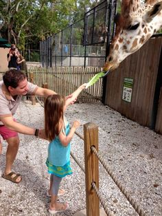 20 Things to Do in Naples, Florida ~ #4 feed the giraffes at the Naples Zoo!