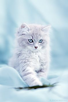Check this out -> Cute Kittens And Puppies And Bunnies Wallpaper Cute Baby Cats, Kittens And Puppies, Cute Little Animals, Cute Cats And Kittens, Kittens Cutest, Fluffy Kittens, Ragdoll Kittens, Bengal Cats, Baby Pets
