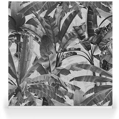 Crazy Banana charcoal A N Wallpaper, Summer Paradise, Tropical Leaves, Plant Leaves, Charcoal, Banana, Canvas, Bespoke, Robin