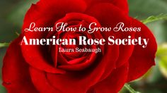Learn How To Grow Roses : American Rose Society