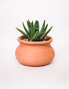 These rustic terracotta pots, with their porous texture, raw finish and pale red-orange hue, remind us of the clay bluffs of the southwest. Paired with your favorite succulent, cactus or tropical plan