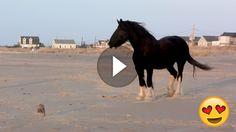 """""""Vollgas!"""" – Dieses Pferd weiß, wie man am Strand Spaß hat und flitzt mit den Hundefreunden um die Wette!"""
