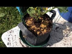 How To Make A Very Easy Grow Bag Trellis! I Think You Will Love This!