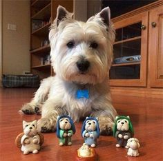 'Mum bought these Miniature 'Me's' in a Charity Shop Today' - West Highland Terrier Dog