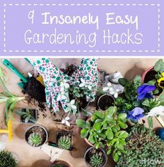 The Advantages Of Growing Food Indoors With Hydroponic Gardening Old Garden Tools, Garden Yard Ideas, Easy Garden, Garden Art, Outside Plants, Outdoor Plants, Hydroponic Gardening, Hydroponics, Indoor Gardening