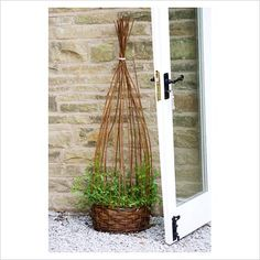 absolutely adorable way to plant a climbing vine! love the rustic twigs! Wicker Planter, Planters, Wicker Baskets, Container Plants, Container Gardening, Garden Plants, Vegetable Garden, Growing Sweet Peas, Climbing Vines